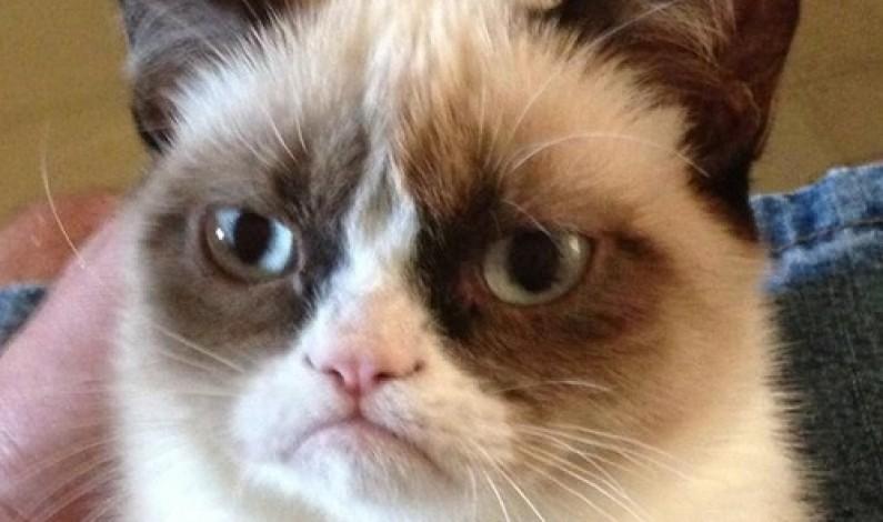 Apokalipsa oczami internautów: koty, dinozaury, Chuck Norris