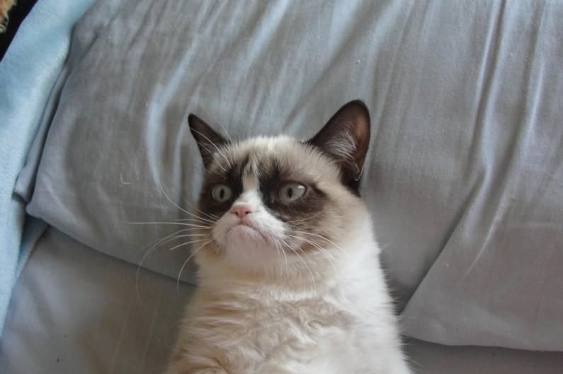 Jak zrzędliwy kot stał się bohaterem Internetu?