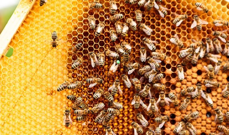 Uratowali już milion pszczół