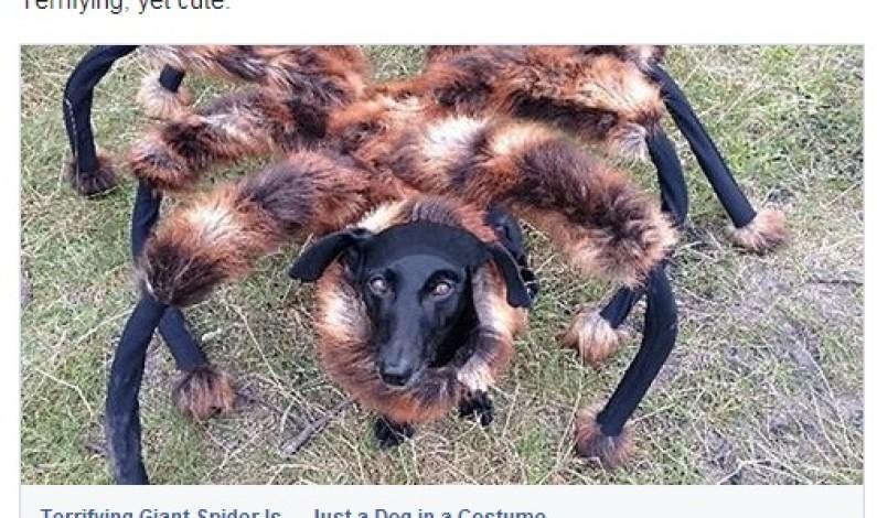 Już wiadomo, ile zarobił Wardęga na filmie o pieso-pająku