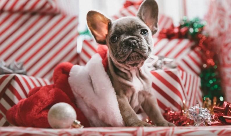 Zobacz 10 najpiękniejszych reklam i kampanii świątecznych