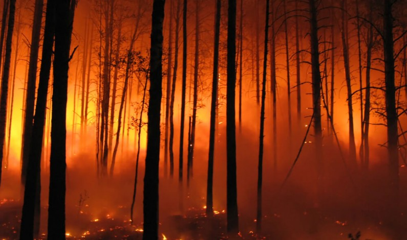 Rozmowy na Twitterze pomogą szybciej wykryć pożary lasów