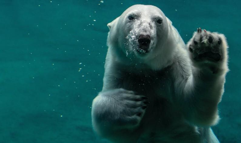 Facebook podejmuje kroki w walce ze zmianami klimatycznymi
