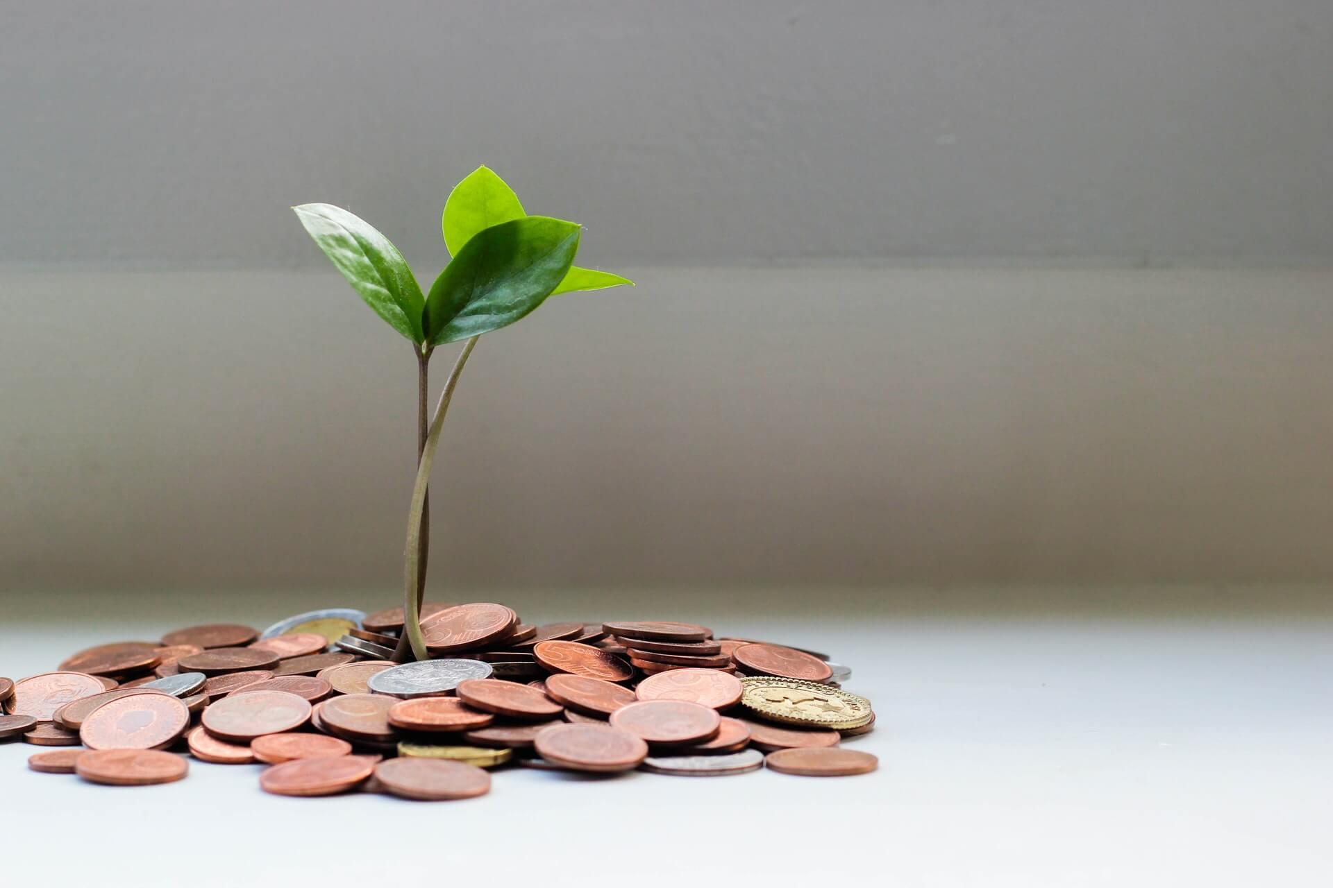 Rozsypane monety, z których wyrasta roślina.